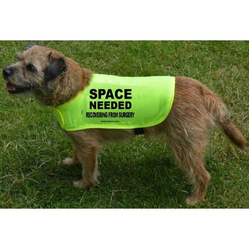 Space Needed - recovering from surgery - Fluorescent Neon Yellow Dog Coat Jacket