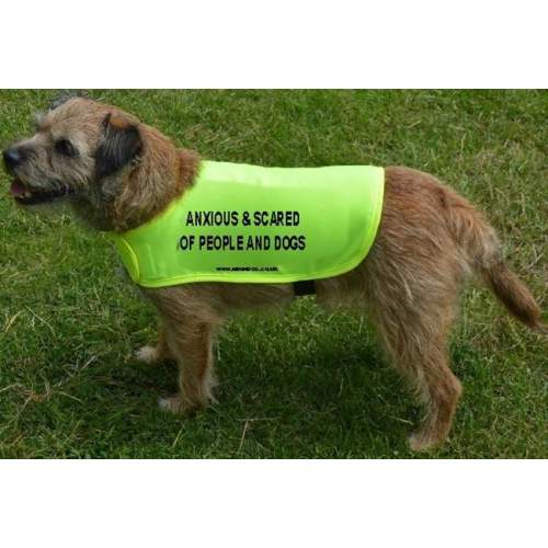 anxious and scared of people and dogs - Fluorescent Neon Yellow Dog Coat Jacket