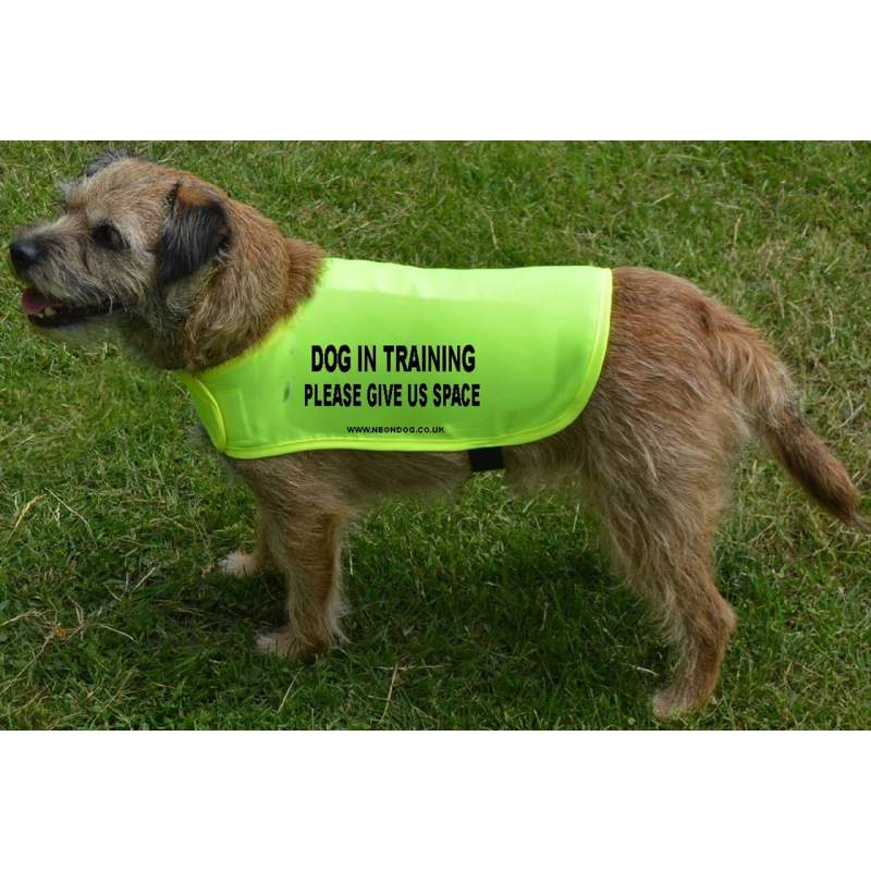 Dog in training - please give us space - Fluorescent Neon Yellow Dog Coat Jacket