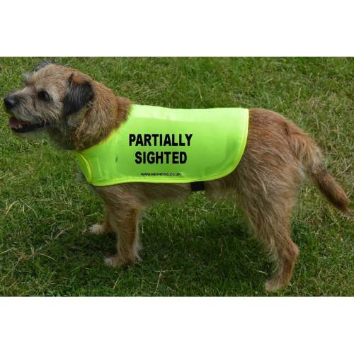 partially sighted - Fluorescent Neon Yellow Dog Coat Jacket