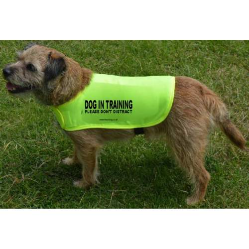 Dog In Training Please don't distract - Fluorescent Neon Yellow Dog Coat Jacket