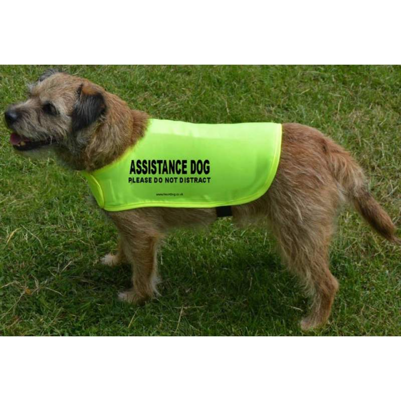 Assistance Dog Please Do Not Distract - Fluorescent Neon Yellow Dog Coat Jacket
