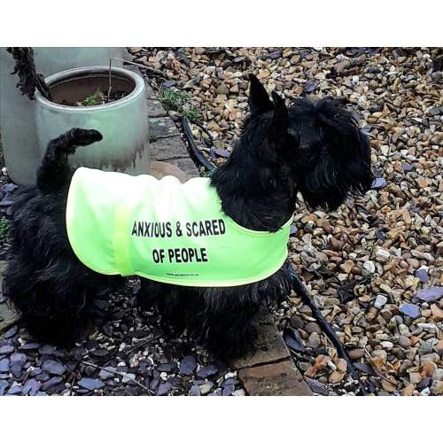 Anxious & Scared Of People - Fluorescent Neon Yellow Dog Coat Jacket