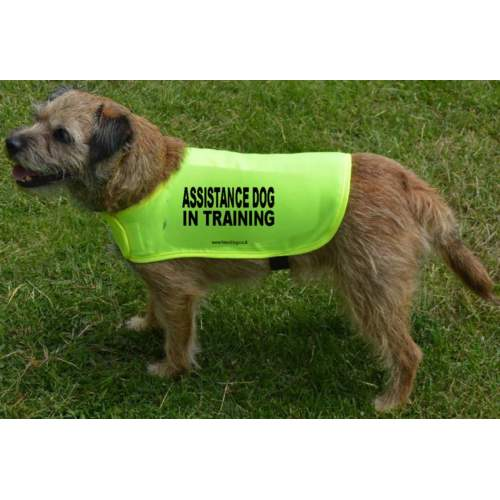 Assistance Dog In Training - Fluorescent Neon Yellow Dog Coat Jacket