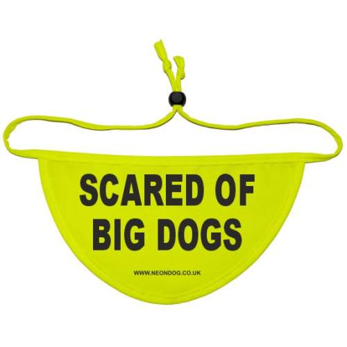 scared of big dogs- Fluorescent Neon Yellow Dog Bandana