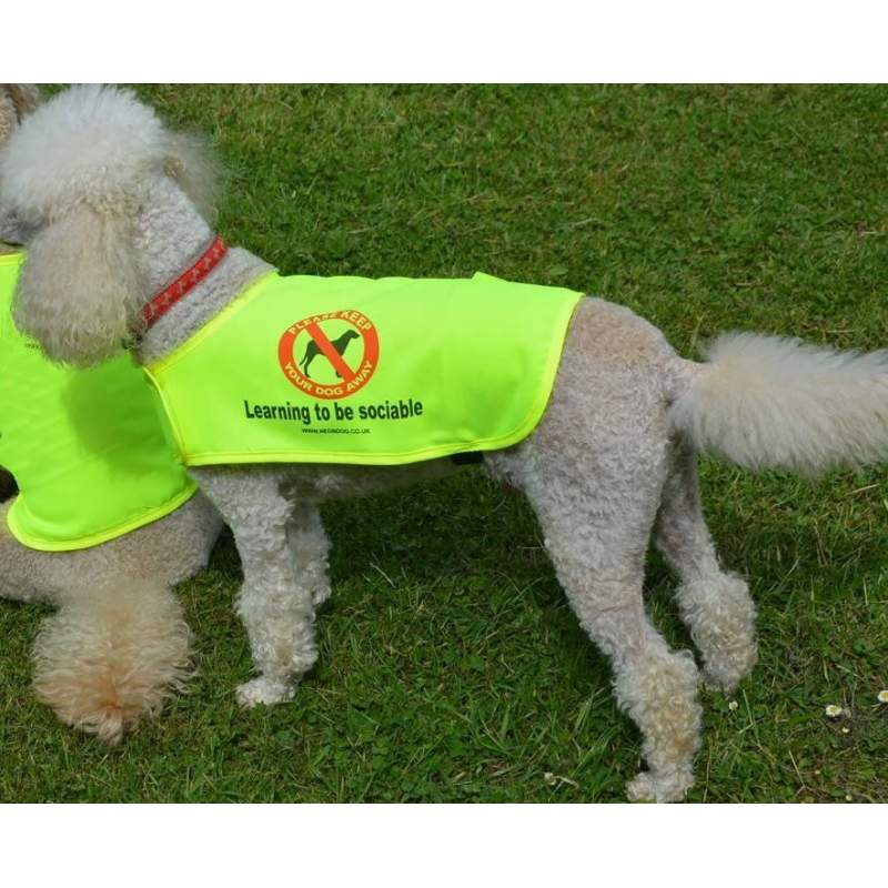 Learning to be sociable - Fluorescent Neon Yellow Dog Coat Jacket