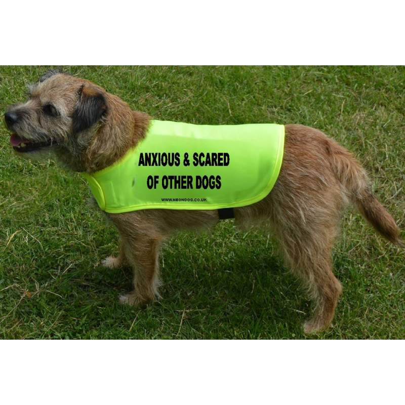 Anxious & Scared Of Other Dogs - Fluorescent Neon Yellow Dog Coat Jacket