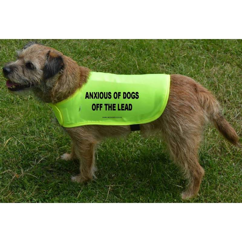 Anxious of dogs OFF the lead - Fluorescent Neon Yellow Dog Coat Jacket