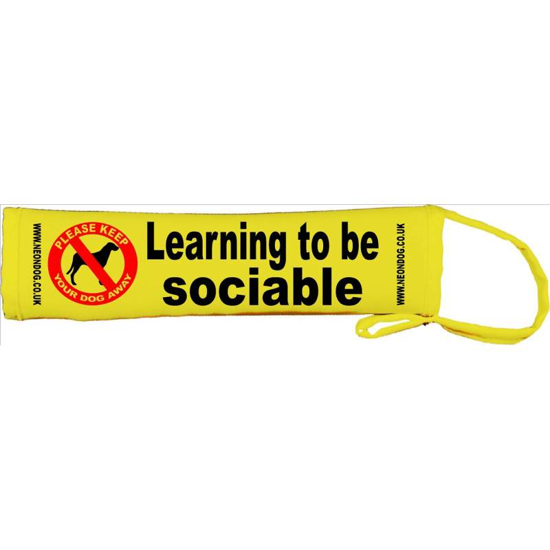 Learning to be sociable - Fluorescent Neon Yellow Dog Lead Slip